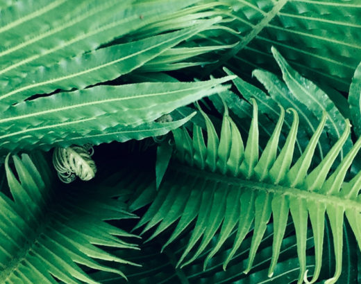 Article Histoire de la Naturopathie