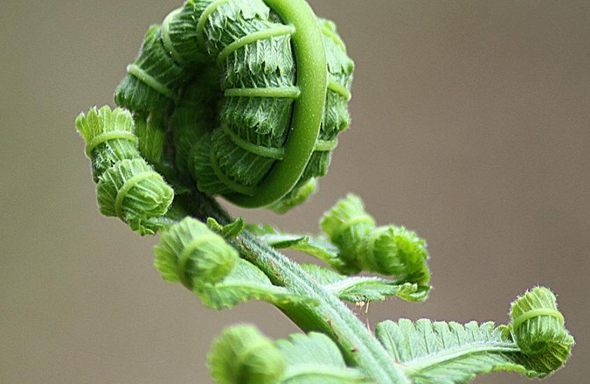 jeune pousse plante bourgeon